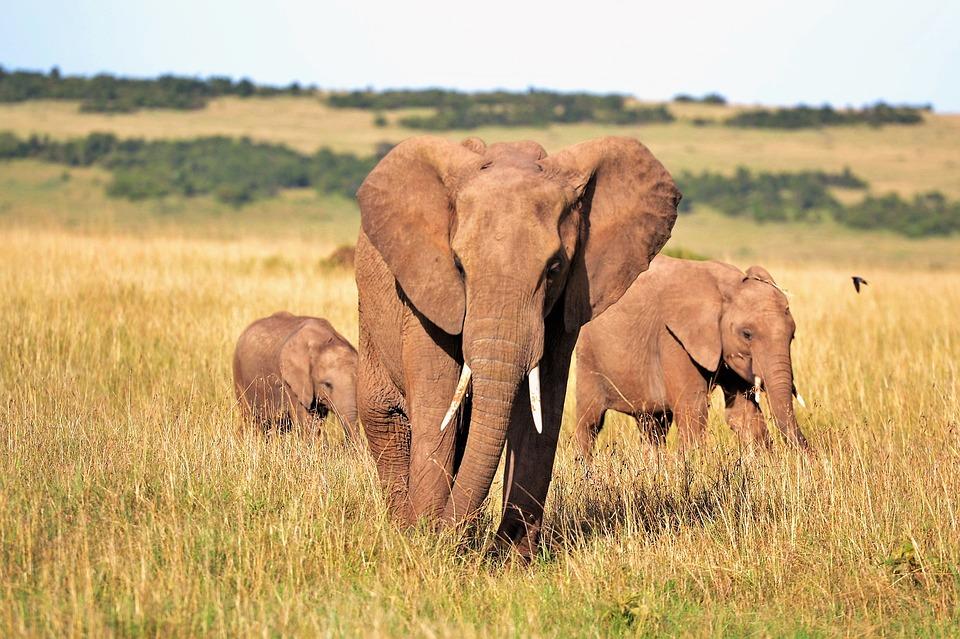 découverte culturelle au Kenya